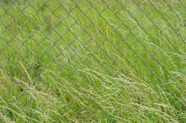 푸른 잔디의 전체 필드에 금속 울타리의 근접 촬영 샷 무료 사진