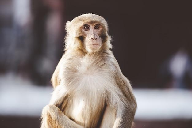 屋外に座っている猿のクローズアップショット 無料写真