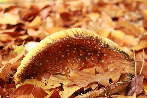 秋の乾燥した葉の中で成長しているキノコのクローズアップショット 無料写真
