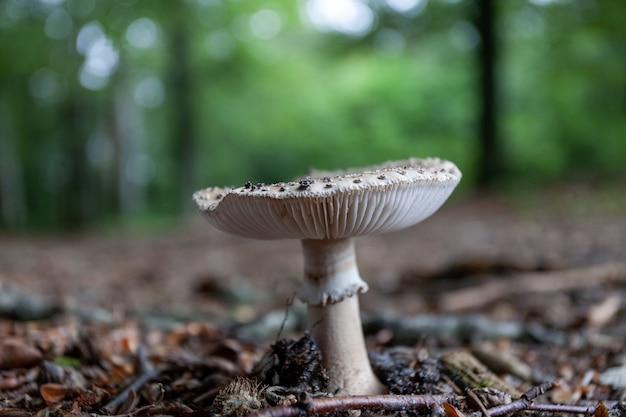 森で育つキノコのクローズアップショット 無料写真