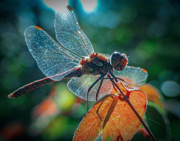 葉の上のアミメカゲロウのクローズアップショット 無料写真