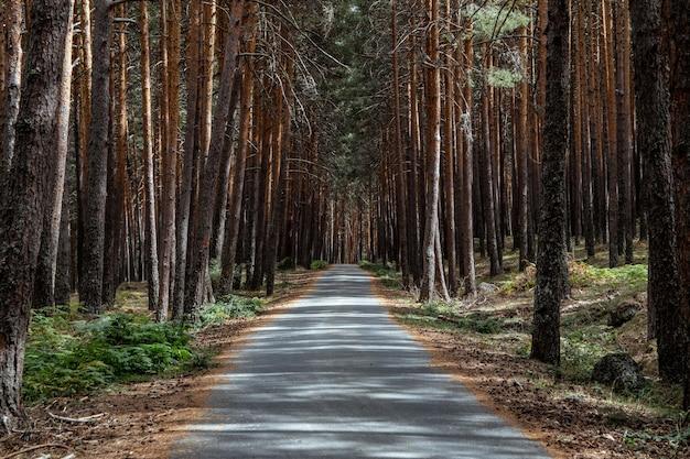 Крупным планом выстрелил тропинки и стволы в лесу Premium Фотографии