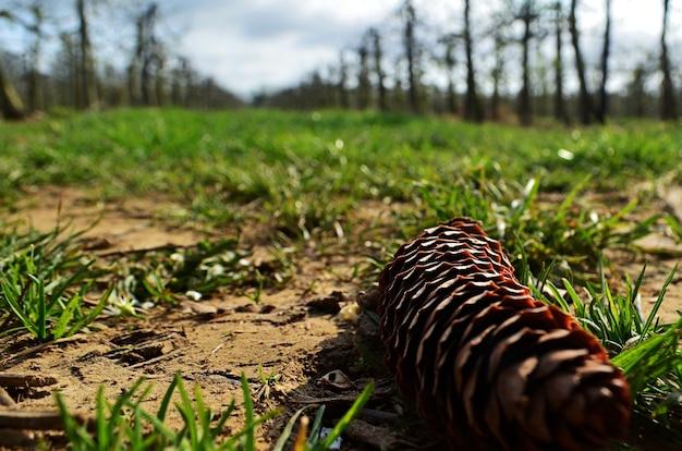 Снимок крупным планом сосновой шишки на земле Бесплатные Фотографии
