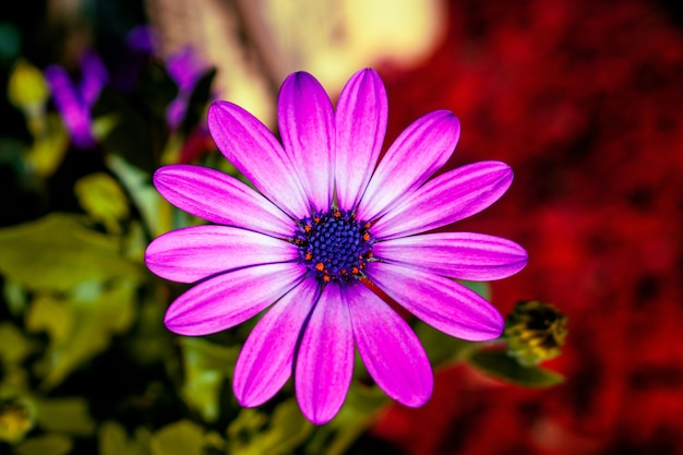Крупным планом выстрел из фиолетового цветка Бесплатные Фотографии