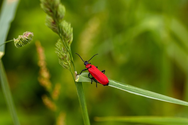 Снимок крупным планом красного насекомого, стоящего на зеленой траве Бесплатные Фотографии