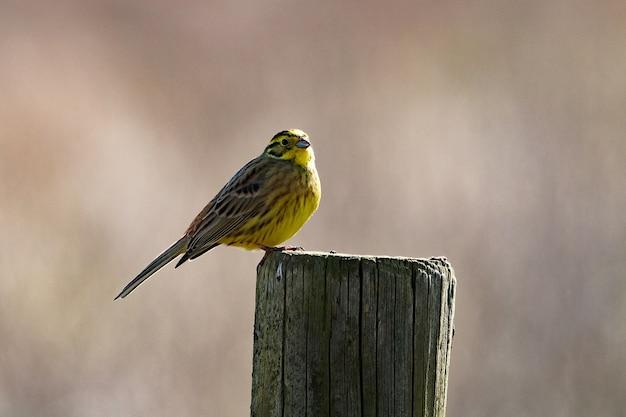 Снимок крупным планом маленькой птички, сидящей на высохшем дереве Бесплатные Фотографии