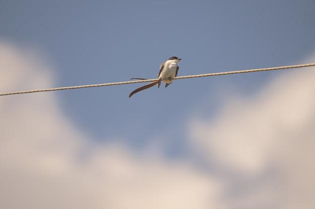 ロープに座っている小鳥のクローズアップショット 無料写真