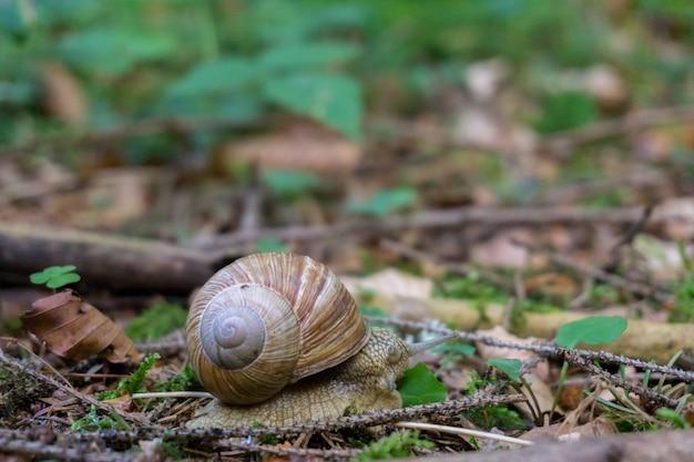 多くの乾燥した葉で覆われた地面にカタツムリのクローズアップショット 無料写真