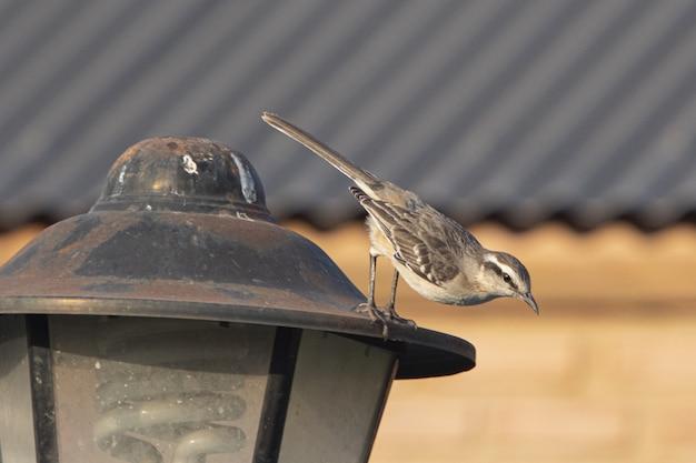 街路灯に座っているスズメのクローズアップショット 無料写真