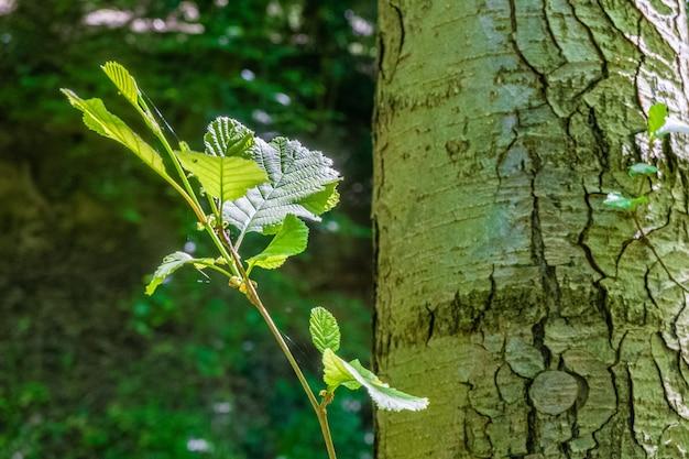 Снимок крупным планом ветки дерева с зелеными листьями в лесу Бесплатные Фотографии