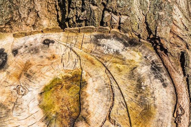 昼間の木の切り株のテクスチャのクローズアップショット 無料写真