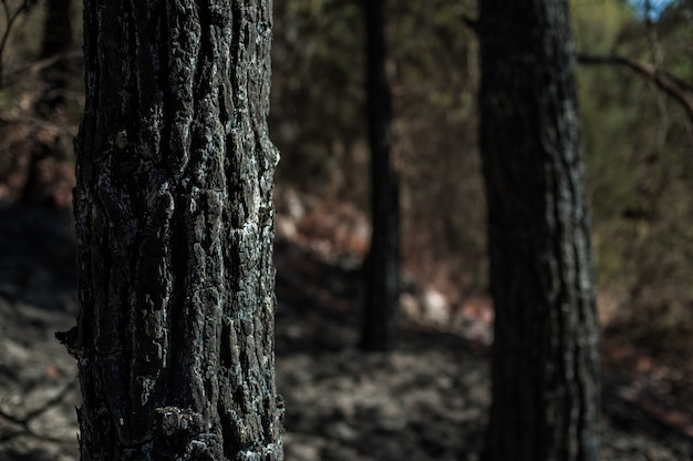 흐리게와 나무 줄기의 근접 촬영 샷 무료 사진