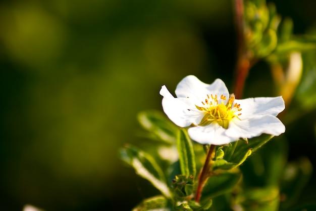 緑の背景の後ろに白い花のクローズアップショット 無料写真