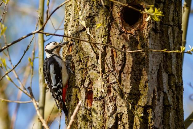 나무에 딱따구리의 근접 촬영 샷 무료 사진