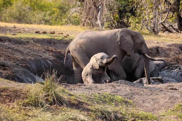 自然界の大人と少年の象のクローズアップショット 無料写真