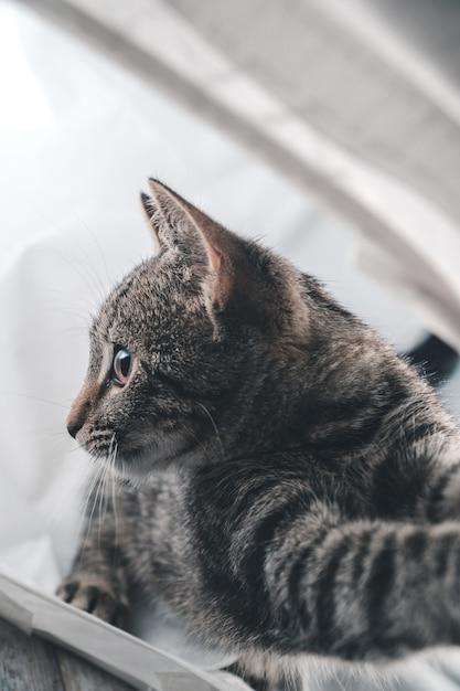 Крупным планом выстрел очаровательны милый серый кот в помещении Бесплатные Фотографии