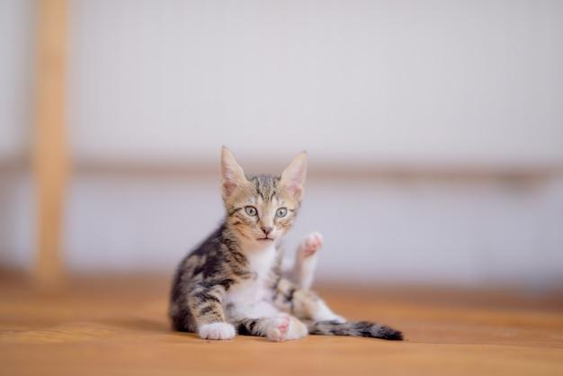 배경 흐리게에 사랑스러운 새끼 고양이의 근접 촬영 샷 무료 사진