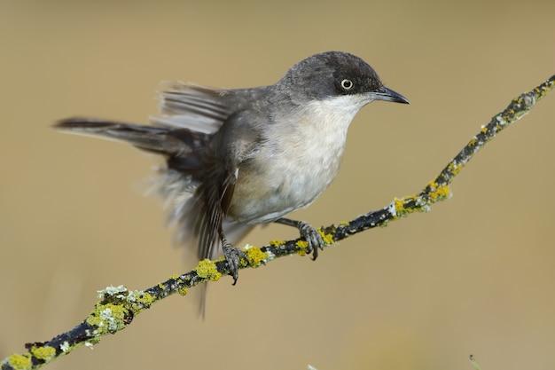 나무의 작은 가지에 쉬고 이국적인 새의 근접 촬영 샷 무료 사진