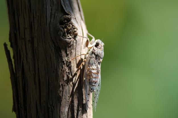 Крупным планом выстрел насекомого с крыльями на дереве Бесплатные Фотографии