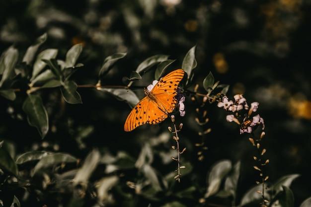 Крупным планом выстрел оранжевой бабочки на цветке Бесплатные Фотографии