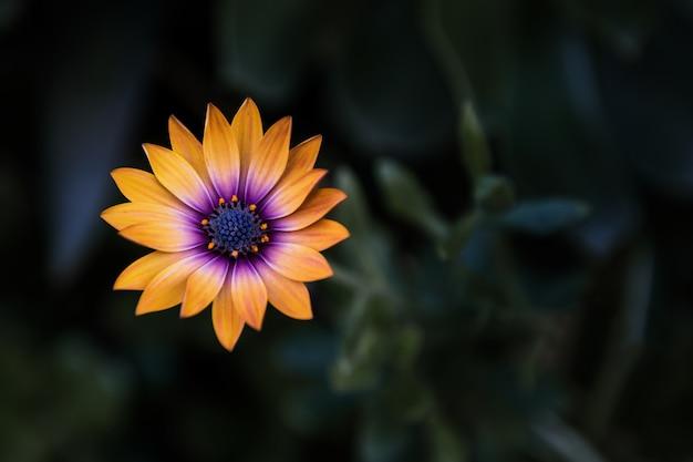 ぼやけた背景とオレンジ色の花のクローズアップショット 無料写真
