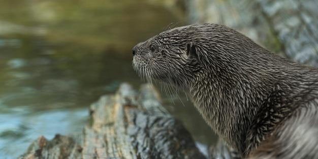 강보고 수달의 근접 촬영 샷 무료 사진