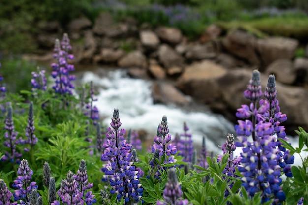Снимок крупным планом красивых фиолетовых листьев папоротника и цветов лаванды у реки Бесплатные Фотографии
