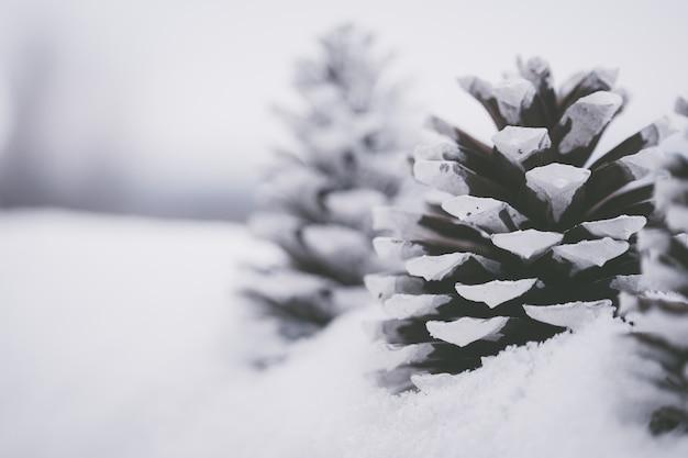 雪の中で美しい白い松ぼっくりのクローズアップショット 無料写真