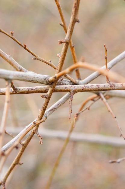 もつれた木の枝のクローズアップショット 無料写真
