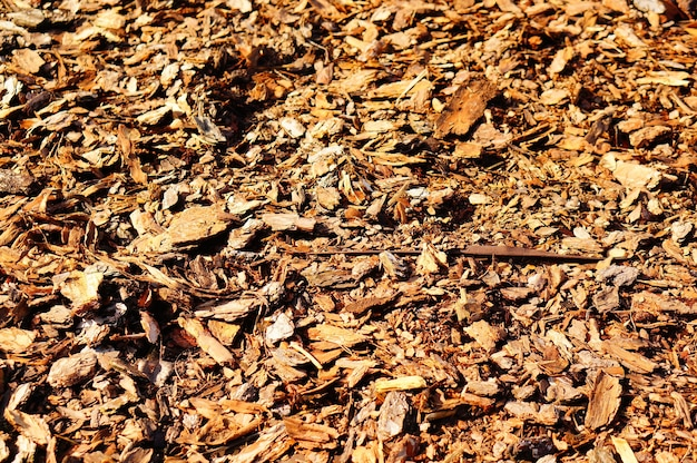昼間の地面に茶色の葉のクローズアップショット 無料写真