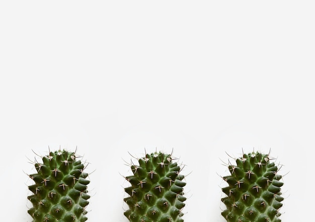 白い背景で隔離のサボテン植物のクローズアップショット 無料写真