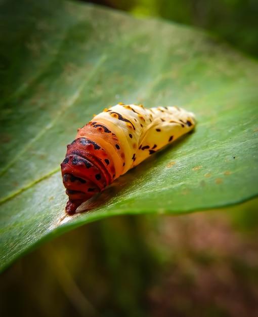 Крупным планом выстрел красочные гусеницы на листе Бесплатные Фотографии