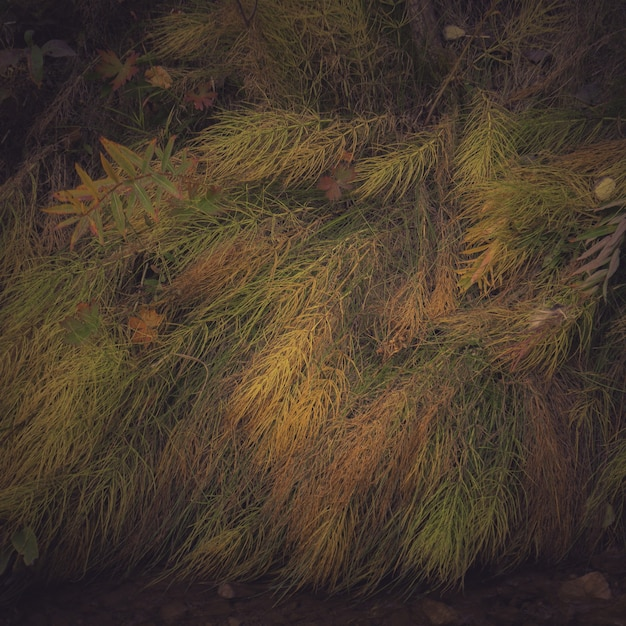 地面に敷設のカラフルな野生植物のクローズアップショット 無料写真