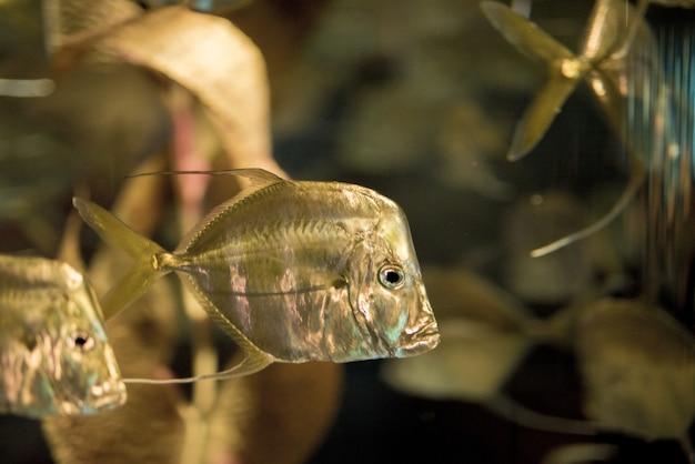 Крупным планом выстрел из рыбы под водой Бесплатные Фотографии