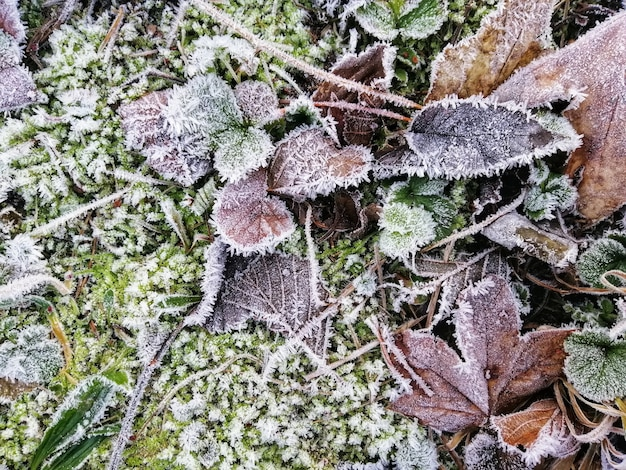 スタバーン、ノルウェーの森で凍った葉のクローズアップショット 無料写真