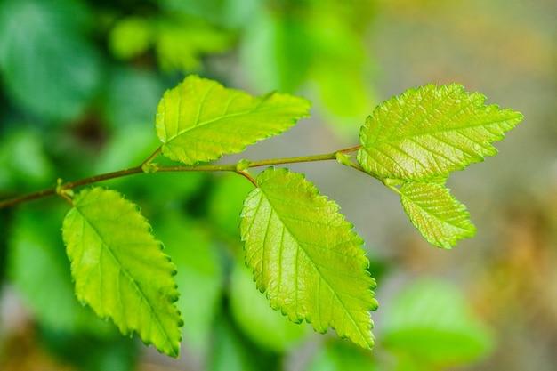 緑の新鮮な葉のクローズアップショット 無料写真