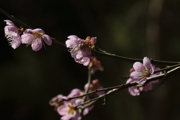 木の枝に紫色の花のクローズアップショット 無料写真