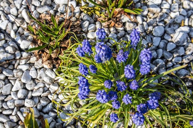 Снимок крупным планом фиолетовых цветов с зеленью и камнями Бесплатные Фотографии
