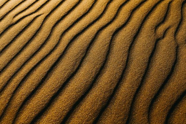 ビーチの砂丘のクローズアップショット 無料写真