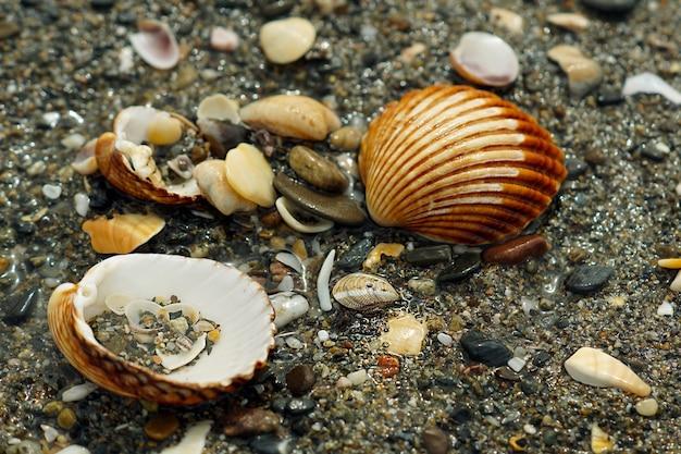 カタツムリと多くの異なるサイズ、色、形の小石のクローズアップショット 無料写真