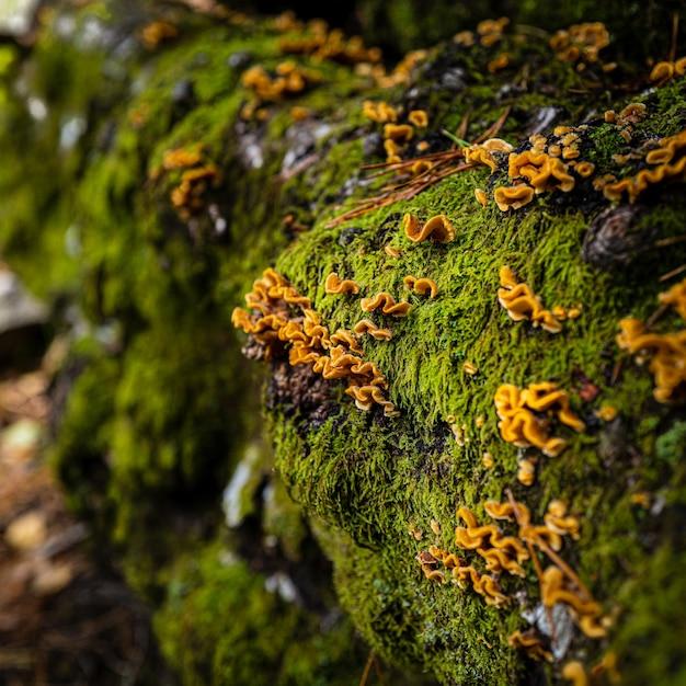 Макрофотография выстрел из камней полностью покрыты мхом и желтыми цветами Бесплатные Фотографии