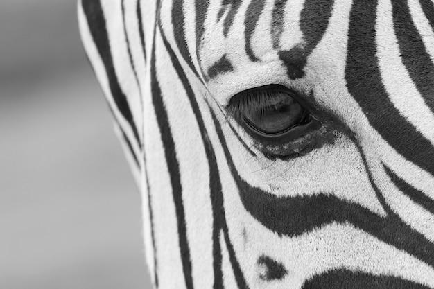 美しいシマウマの目のクローズアップショット 無料写真