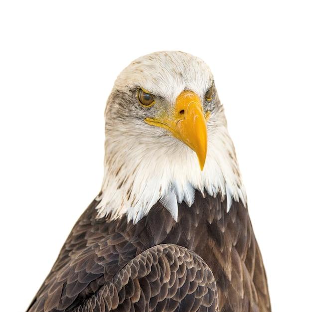 雄大なワシの頭のクローズアップショット 無料写真