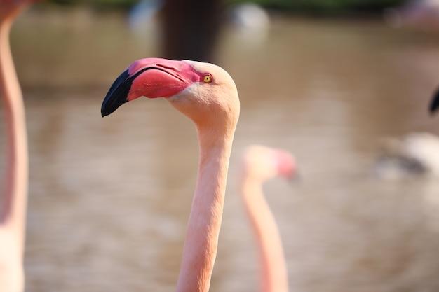 水の前でピンクのフラミンゴの頭のクローズアップショット 無料写真