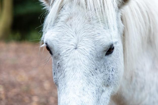 Снимок крупным планом головы белой лошади в торнекомб вудс, дорчестер, дорсет, великобритания Бесплатные Фотографии