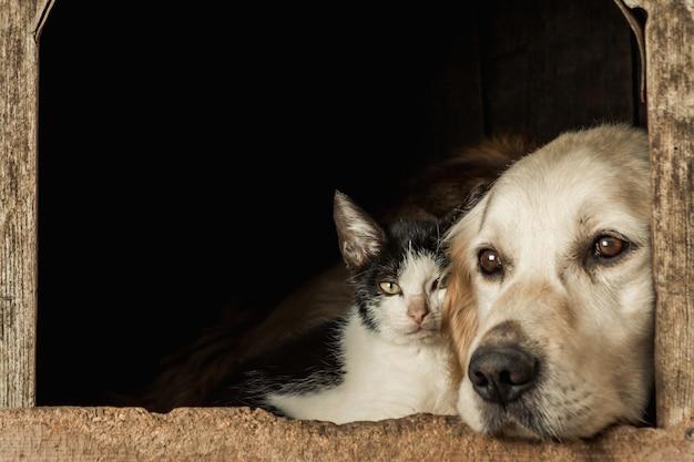 Снимок крупным планом морды милой собаки и кошки, сидящей щекой к щеке Бесплатные Фотографии