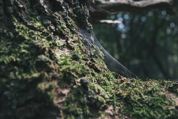 Снимок паутины на стволе дерева крупным планом Бесплатные Фотографии