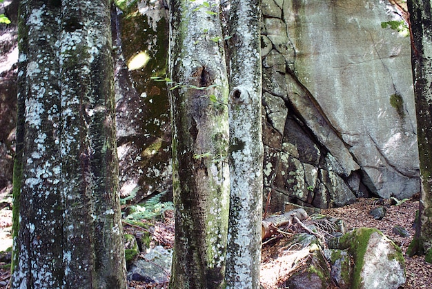 木の幹に白い苔のクローズアップショット 無料写真