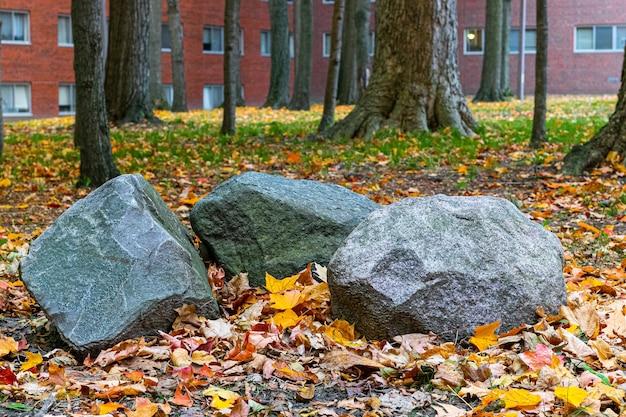 公園の木の近くの地面に3つの岩のクローズアップショット 無料写真