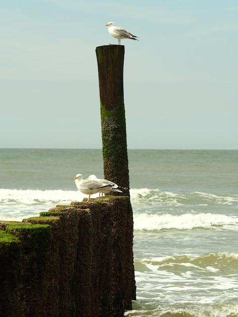 木製のオブジェクトの上に立って3つの白いカモメのクローズアップショット 無料写真